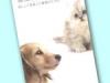 子犬と子猫の健康プログラム