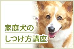 家庭犬のしつけ方講座